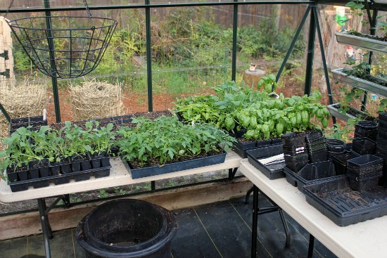 greenhouse tables gardening