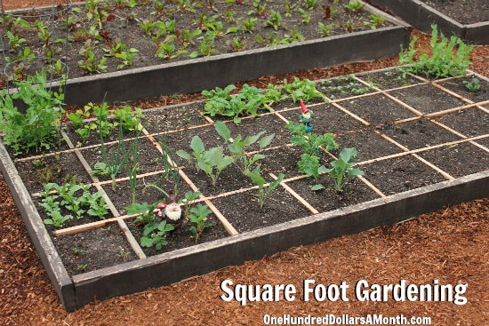 Square Foot Gardening Potatoes Onions Strawberries Kale And More