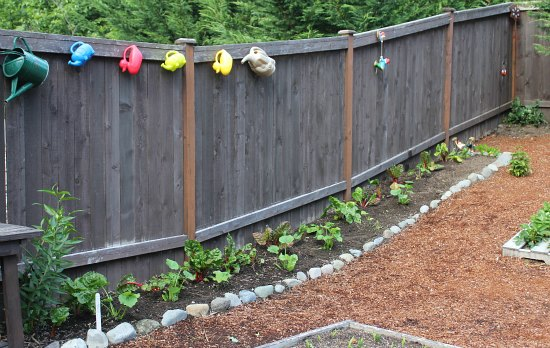 planting vegetables along the fence