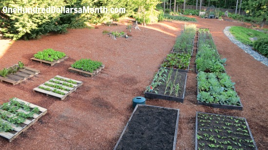 raised garden beds backyard gardening