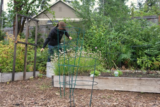 wide tomato cages