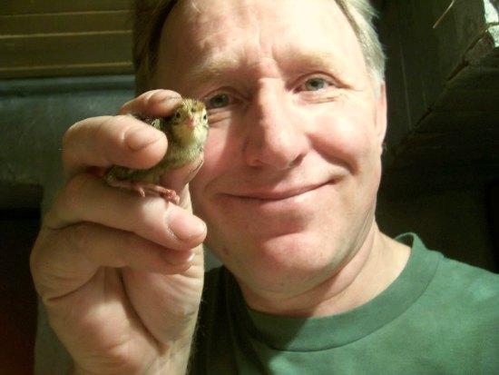 baby quail