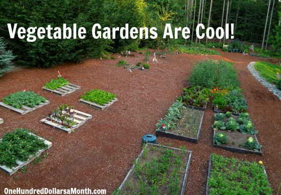 Mavis Butterfield  Backyard Garden Plot Pictures – Week