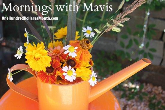 orange flower varieties mornings with mavis