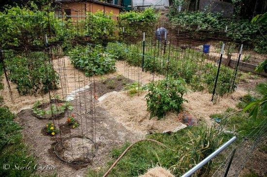backyard-garden-photos