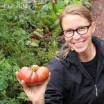 Heirloom Tomato Harvest