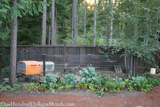 omlet chicken coop cube
