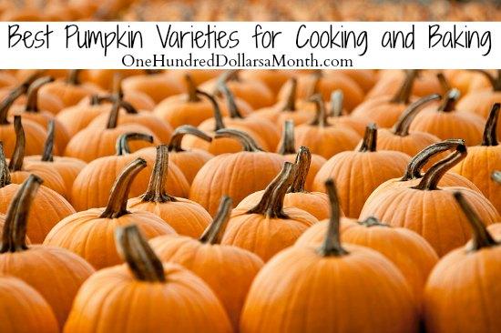Best Pumpkin Varieties for Cooking and Baking