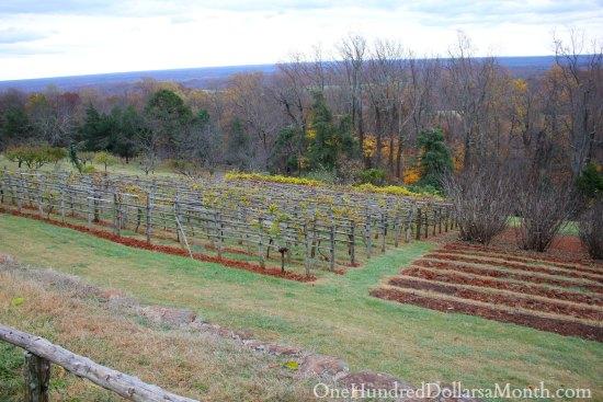 Thomas Jefferson's Monticello Orchard