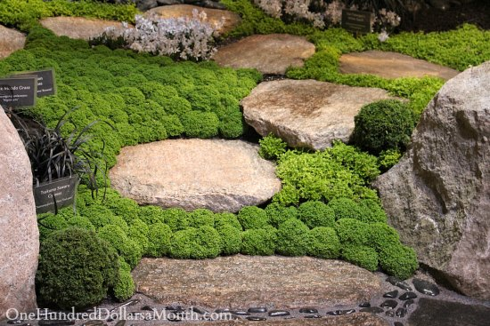 moss walkway moss path