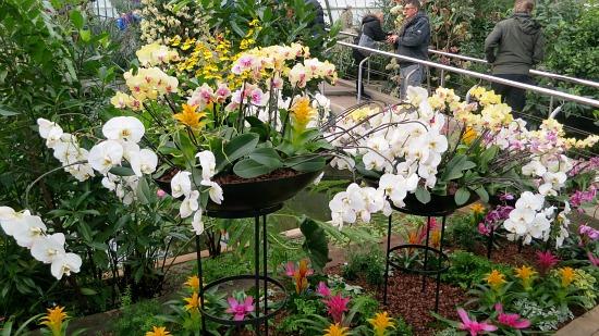 orchid-floral-arrangements-