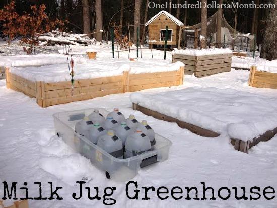 DIY Milk Jug Greenhouse , Winter Sowing