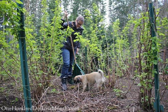mavis butterfield garden lucy the puggle dog