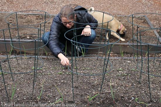 mavis garden blog onions