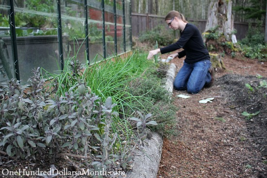 planting a herb garden