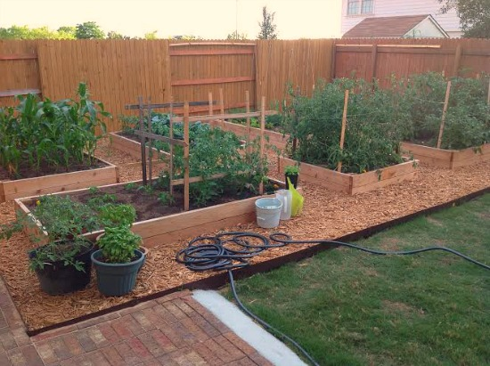 rasied garden boxes backyard set up