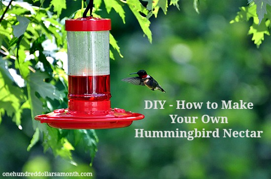 make-your-own-hummingbird-nectar
