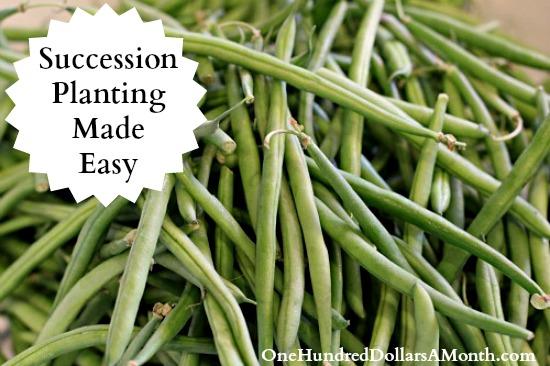 Succession-Planting