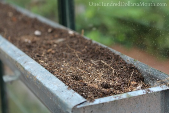 growing seeds in gutters