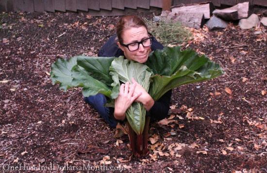 hugging-rhubarb