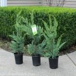 Mavis Butterfield | Backyard Garden Plot Pictures – 1/11/14