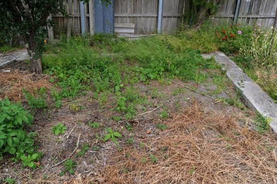 weeds in garden
