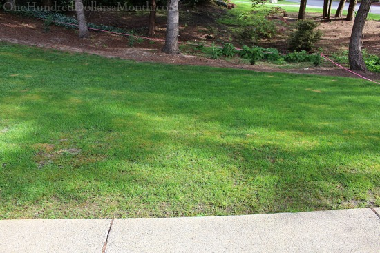 patch of grass