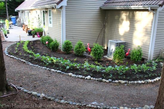 shady vegetable garden
