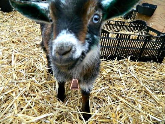 Abigail farm pictures1
