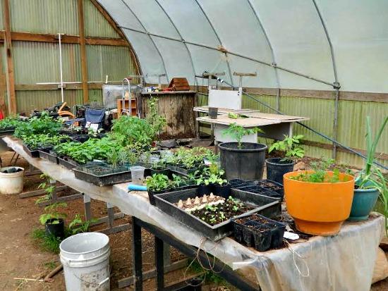 Abigail farm pictures5