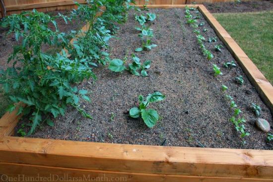 raised garden bed for vegetables
