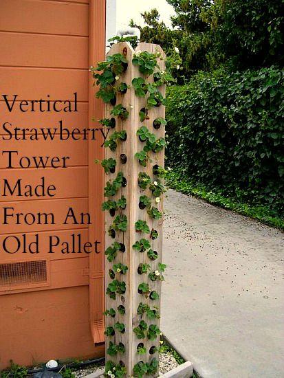 vertical-pallet-gardening-Strawberry-Tower