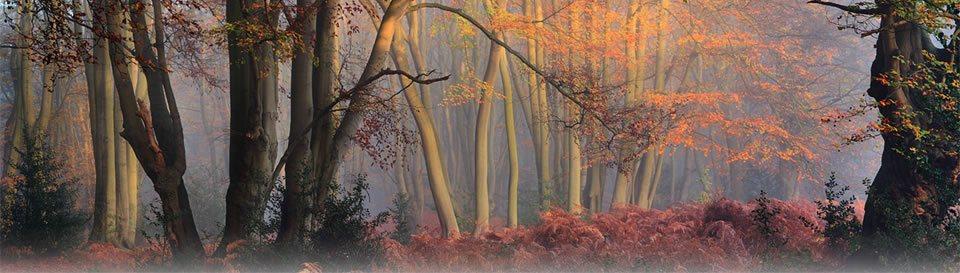 Fall Aesthetic Wallpaper Landscape Photography Magazine On Landscape