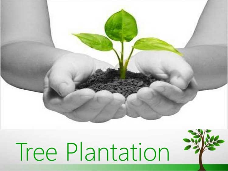 Tree Plantation Paragraph  Essay for all class Students Ontaheen