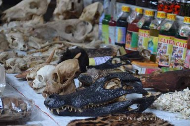 Animals' skulls in the Belen Market in Iquitos