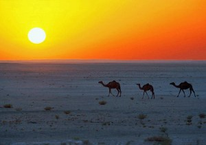Morocco Sahara Tavel - Desert Sunset - Around the World