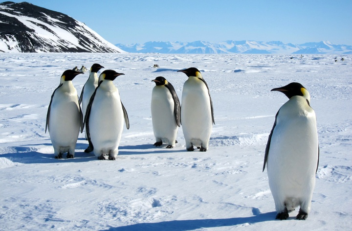 Penguins in Antarctica