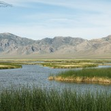 View of the marshes at Fish Springs NWR with the Fish Spring Mountain Range in the background