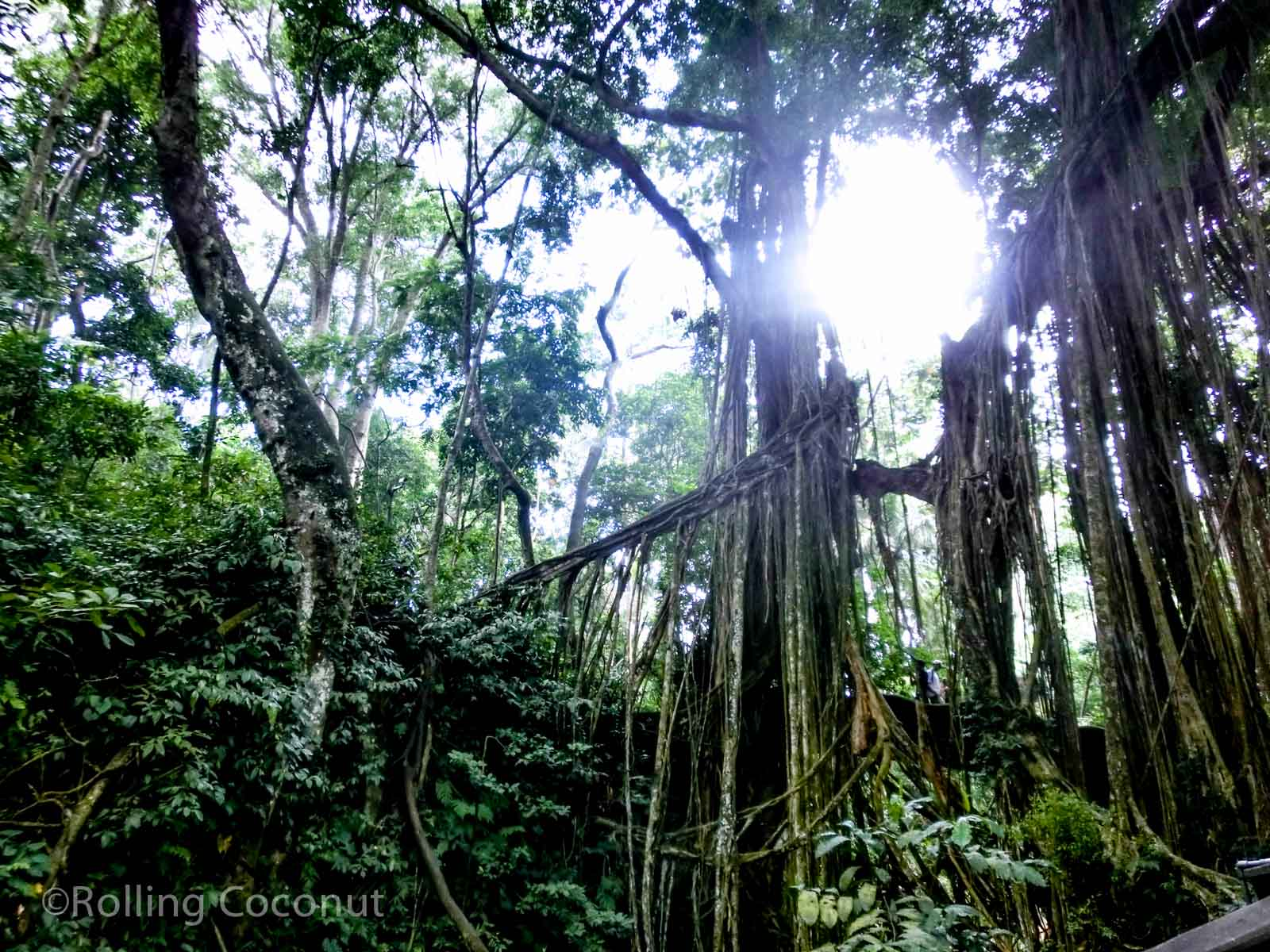 Trees Monkey Forest Ubud Bali Indonesia photo Ooaworld