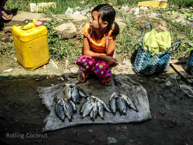 Child Selling Fish at Market, Inle Lake, Myanmar, ooaworld Rolling Coconut Photo Ooaworld