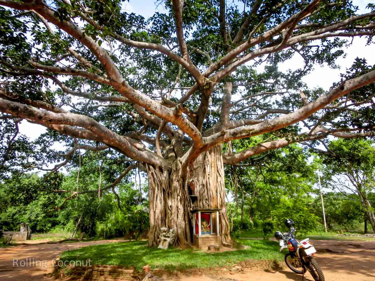 Sigiriya Sri Lanka itinerary Bodhi Tree ooaworld Rolling Coconut Photo Ooaworld