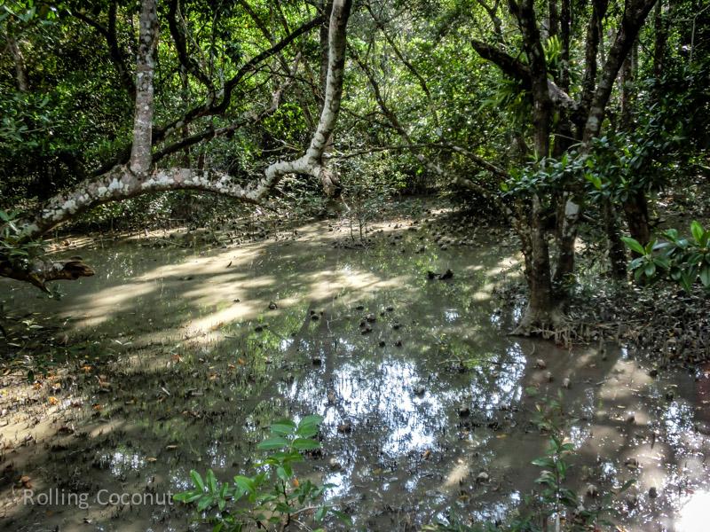 Bangladesh Mongla Sundarbans Forest ooaworld Rolling Coconut Photo Ooaworld