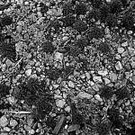 Abstract Photos Texture, Dayton ferns
