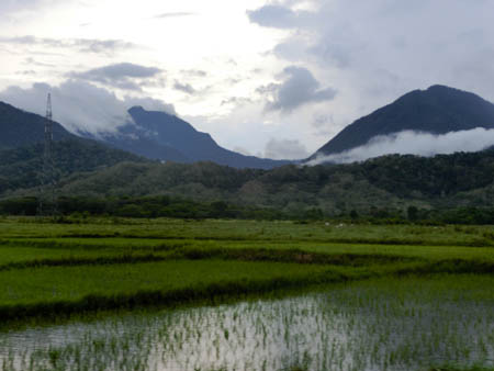 rice paddies iwahig philippines photo ooaworld Rolling Coconut