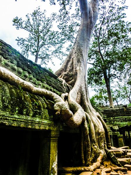 ta promh angkor cambodia photo ooaworld Rolling Coconut