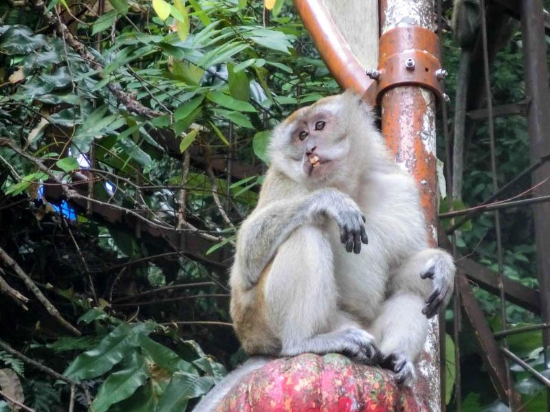 Monkey Batu Caves Kuala Lumpur photo ooaworld Rolling Coconut