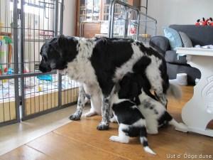 toetjes bij mama halen