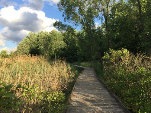 Boardwalk at Maumee Bay State Park