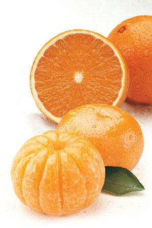 Unique combination of Orlando Tangelos and Navel Oranges