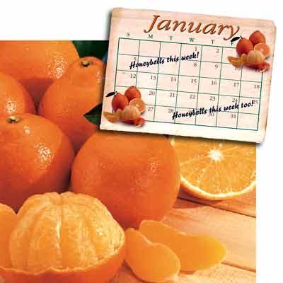 Honeybell Tangelo Oranges - Super Sweet and Juicy